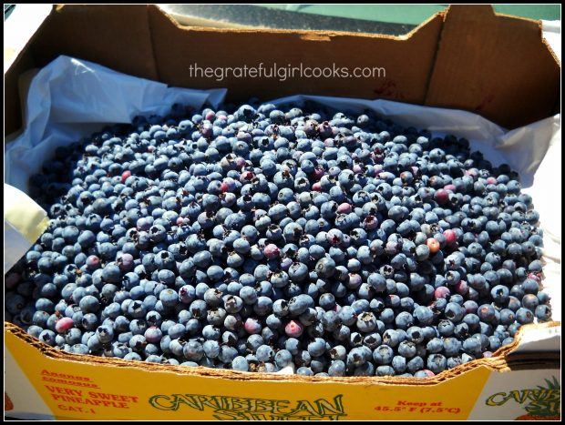 Fresh picked blueberries used to make bagels