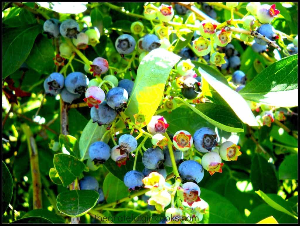 Blueberry Scones with Lemon Glaze / The Grateful Girl Cooks!