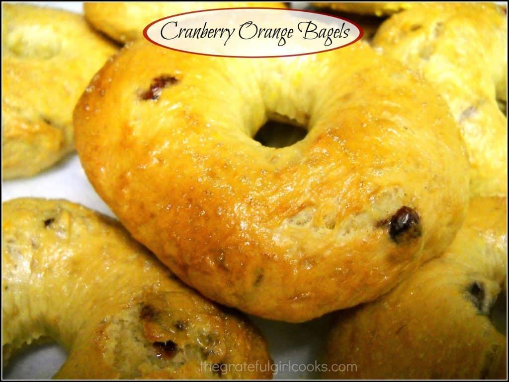 Cranberry Orange Bagels / The Grateful Girl Cooks!