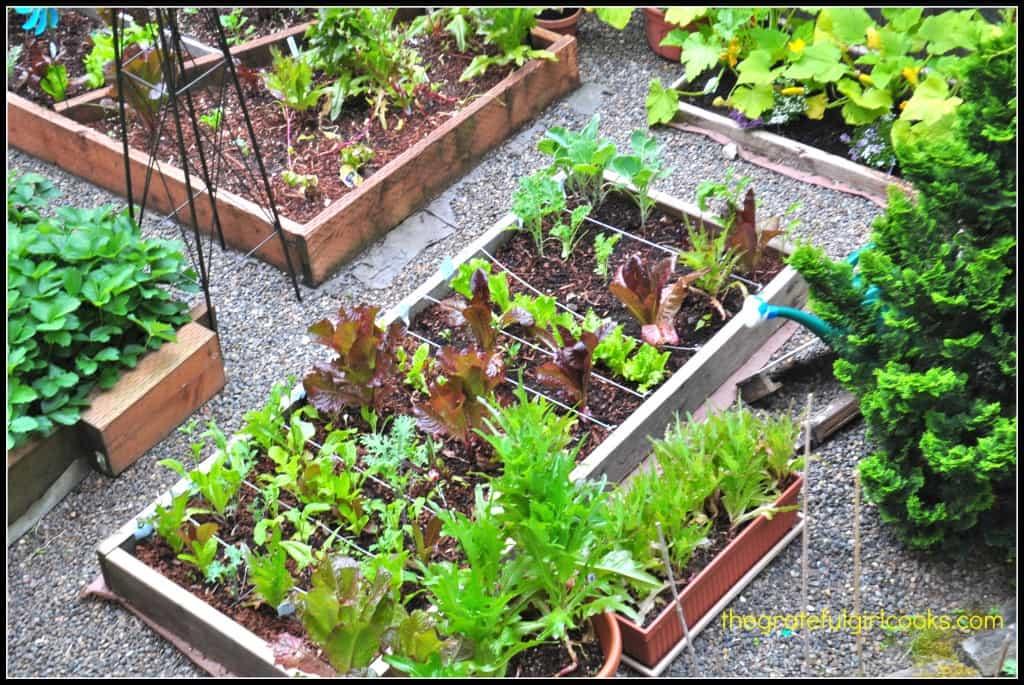 Spring Greens with Citrus Vinaigrette3