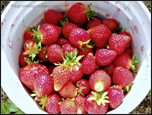 A bucket of fresh strawberries can be used to make more than one strawberry smoothie!