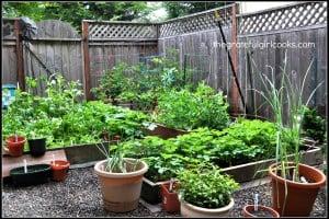 Veggie Garden 2014-6