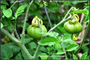 Veggie Garden 2014-7