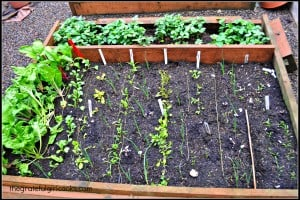 Veggie Garden May 2014