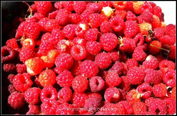 Fresh raspberries ready to make sundae sauce!
