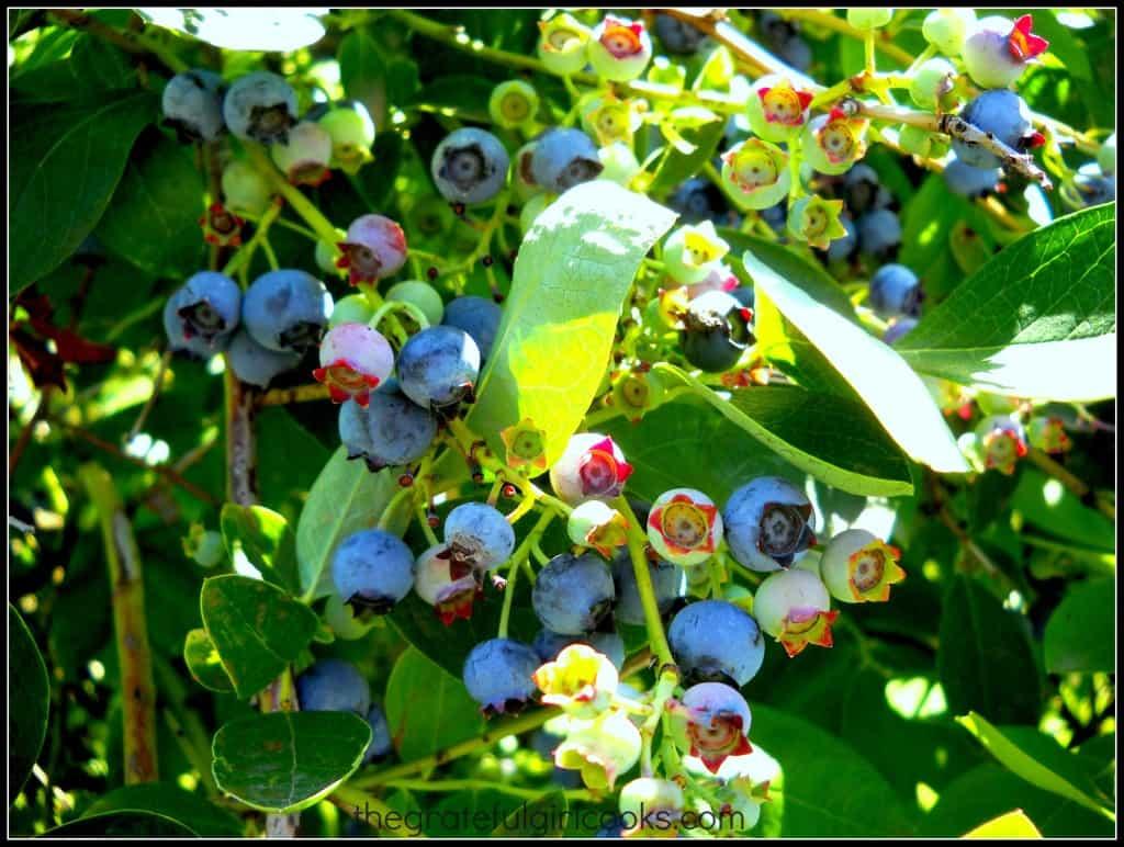 Blueberry Ice Cream / The Grateful Girl Cooks!