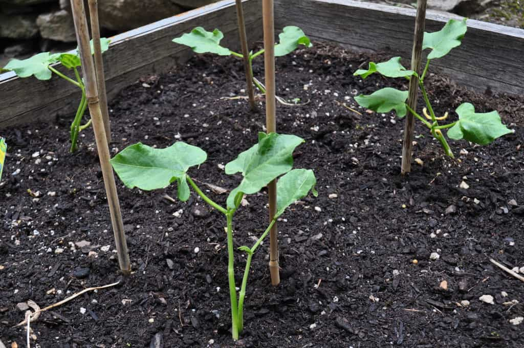Musings on Seed Planting... and New Life!