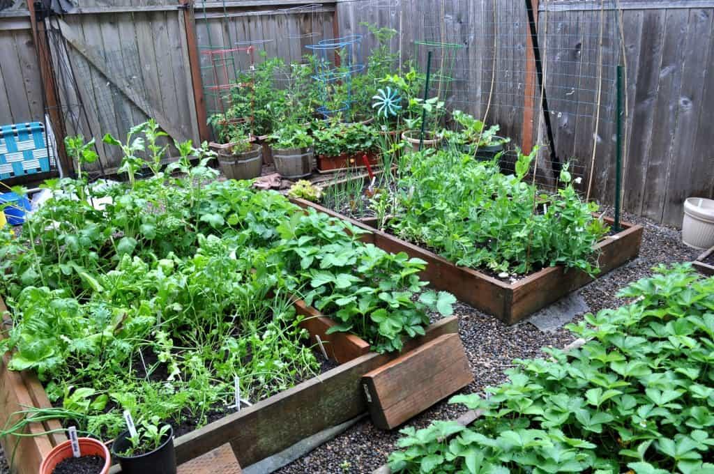 Garden growing.