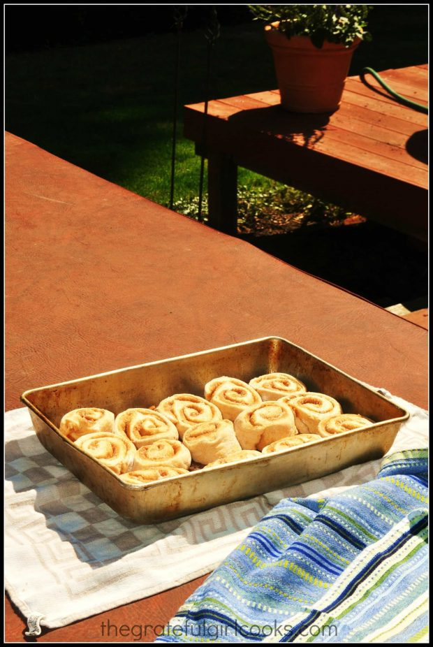 Pecan sticky rolls in pan rising in a warm place!