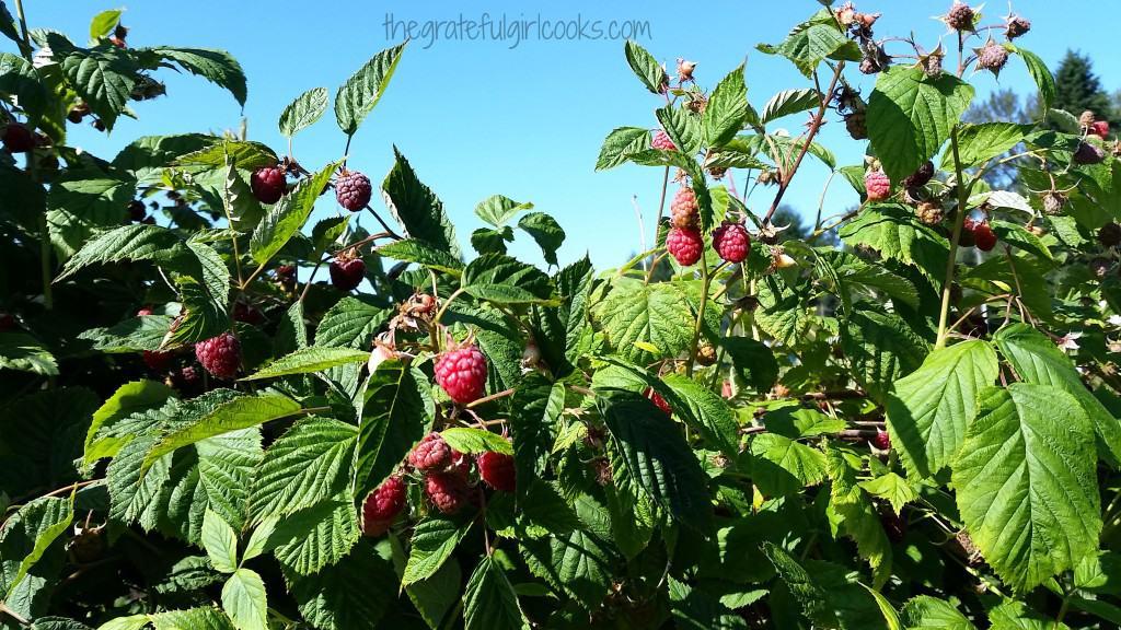 Raspberry Jam / The Grateful Girl Cooks!