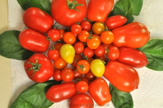 Some of the tomatoes we grew in our garden, used to make Italian-style tomato sauce.