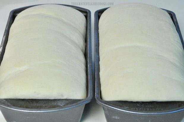 Bread dough in two pans has risen to top of pan
