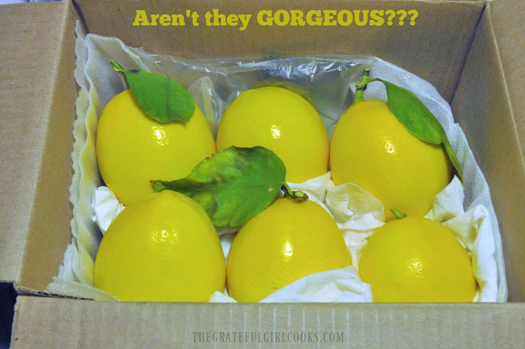 Lemon Ricotta Pancakes / The Grateful Girl Cooks!