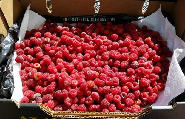 Fresh picked raspberries are perfect to use for jams and smoothies!