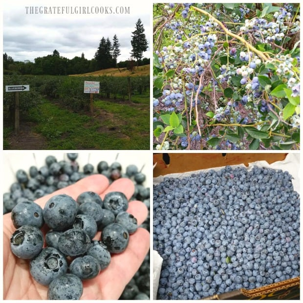 A photo collage from blueberry picking at a local farm.
