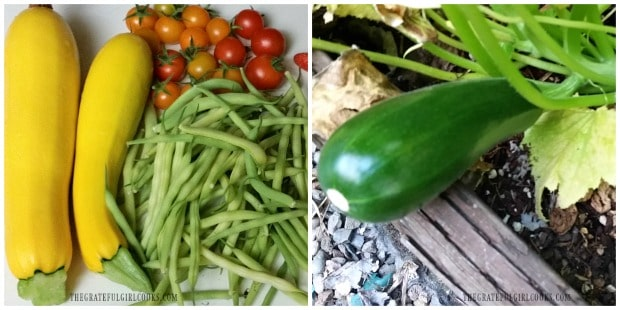 Yellow and green summer squash (zucchini) are used for veggie side dish
