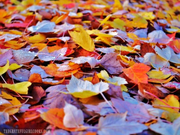 Fall leaves and cooler temperatures encourage us to enjoy hot apple cider!