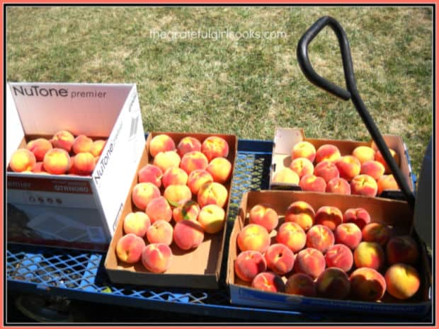 Lots of fresh summer peaches to make delicious desserts and jam with!